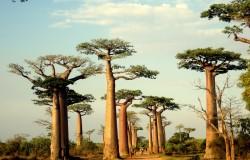 Voyage dans le sud de Madagascar